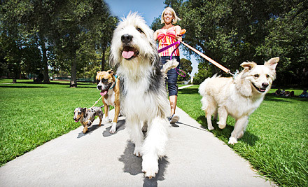 RackMultipart20121017 12630 17yqh0j medium 30  or 60 Minute Dog Walks from Angels Pet Pals (Up to 57% Off). Three Options Available.