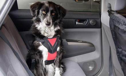 ASPCA Car Pet Barrier or a Medium or Large Car-Safety Harness Deals for only $8 instead of $15